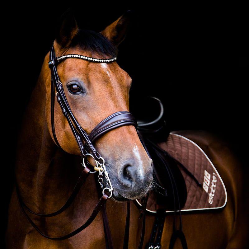 Sprzęt dla koni