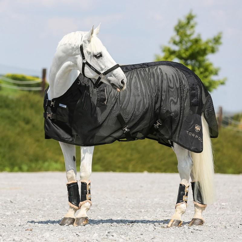 Magnetoterapia u koni – czy warto stosować?
