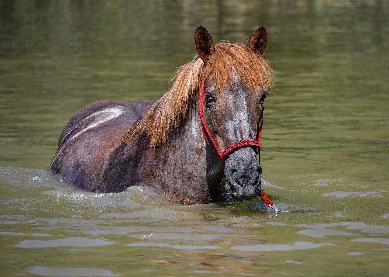 Effol Szczotka do mycia konia