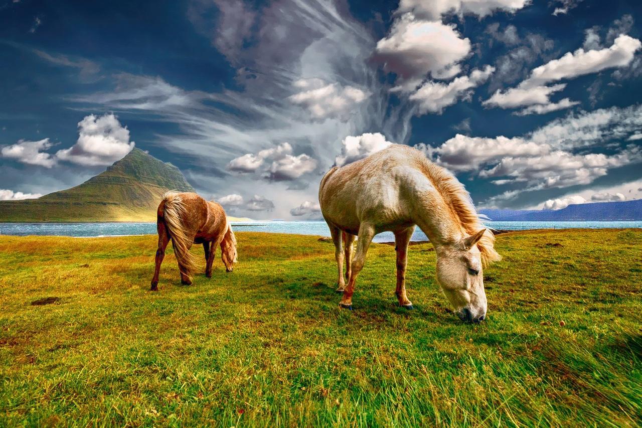 pasze dla konia